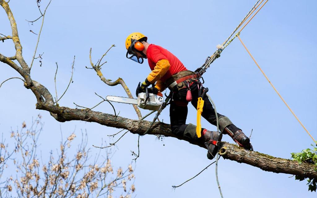 Elagage-abattage-taille-arbre-Hyeres-Lavandou-Bormes-Les-Mimosas-83-Var