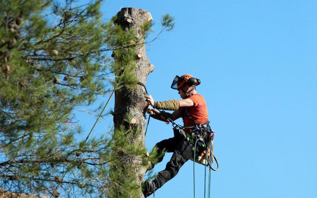élagage des arbres de votre jardin dans le var